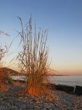 L'herbe au soleil Images libres de droits
