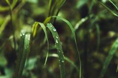L'herbe avec la pluie relâche l'instruction-macro Photo libre de droits