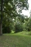 L'herbe a couvert la ruelle par la forêt images stock