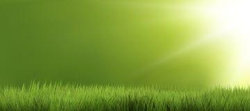 L'herbe 3d de nature d'herbe verte de fond rendent Photos stock