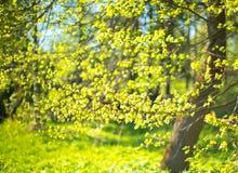 L'herbe d'origan part avec des fleurs sur le hachoir en bois photos libres de droits