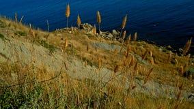 L'herbe de la mer Photo libre de droits