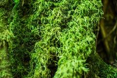 L'herbe de mousse couverte sur la pierre et la terre moites, voient à freshy clo images libres de droits