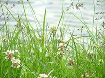 L'herbe de pré Images stock