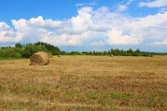 L'herbe du champ Images libres de droits