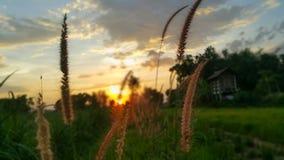 L'herbe en parc Image libre de droits