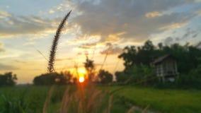 L'herbe en parc Photo libre de droits
