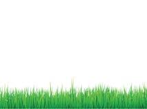 L'herbe encadre le fond Illustration Stock