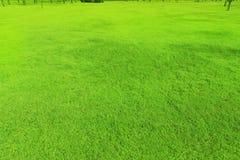 L'herbe est cour lisse, belle, verte dans le jardin photographie stock