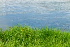 L'herbe est sur la banque du plan rapproché de rivière Images stock