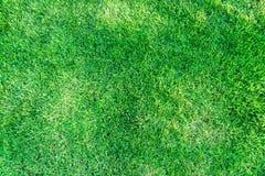 L'herbe est toujours plus verte Images libres de droits