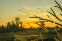 L'herbe et le soleil tombent images libres de droits