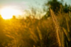 L'herbe et le soleil tombent photo stock