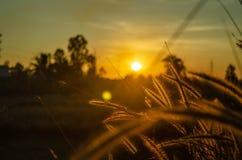 L'herbe et le soleil tombent photographie stock