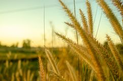 L'herbe et le soleil tombent images stock