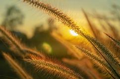 L'herbe et le soleil tombent photo libre de droits