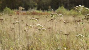 L'herbe et les fleurs pendant l'automne mettent en place le premier plan banque de vidéos