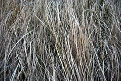 L'herbe grise sèche, foin, fond organique naturel, se ferment vers le haut du macro horizontal image libre de droits