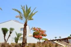 L'herbe, la végétation, l'arbre royal de Delonix avec les fleurs de floraison de rouge, palmier avec le vert part dans une statio photos libres de droits
