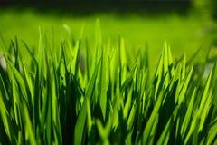 L'herbe part du vert d'ivrogne Image stock
