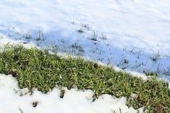 L'herbe partiellement couverte de neige Photo stock
