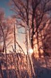L'herbe sèche dans le gel Photo stock