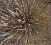 L'herbe sèche du feu de forêt de nature se développe du milieu dans toutes les directions photo stock