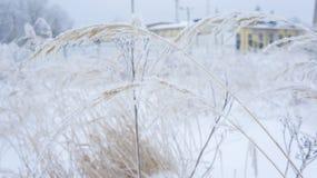 L'herbe sèche jaune dans le gel et la neige s'écaille Photos libres de droits