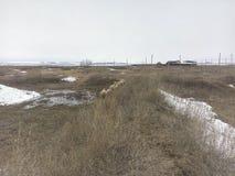 L'herbe sèche, restes de neige, mouton marchent, maison isolée d'A dans la distance, montagnes blanches, saisons, agriculture image libre de droits