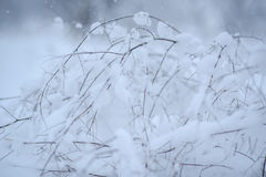 L'herbe sèche sous la neige Photos stock