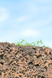 L'herbe s'élevant sur des roches avec le ciel bleu Images stock