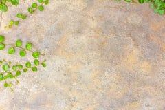 L'herbe sur le béton Images libres de droits