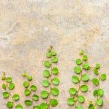 L'herbe sur le béton Image stock