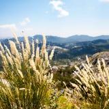 L'herbe sur le dessus du bâti Lovcen, Monténégro Images libres de droits