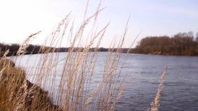 L'herbe sur les banques de la rivière banque de vidéos
