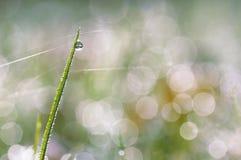 L'herbe verte avec de l'eau se laisse tomber sur un fond de bokeh photographie stock
