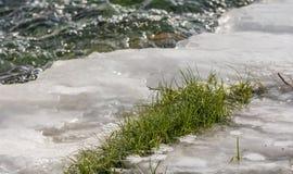 L'herbe verte défie les températures glaciales de l'hiver images stock