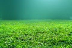 L'herbe verte de ressort frais sur le fond vert peut employer comme texture Photo libre de droits