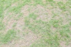 L'herbe verte extérieure de plan rapproché avec l'herbe sèche dans une certaine partie dans le jardin a donné au fond une consist Images libres de droits