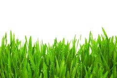 L'herbe verte fraîche avec des baisses mouillent/d'isolement sur le blanc Photographie stock