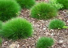 L'herbe verte ronde rapièce l'élevage dans le jardin Photos libres de droits