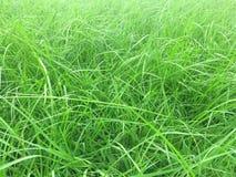 L'herbe verte se développe tout autour du parc naturel de ressort de fond photographie stock libre de droits