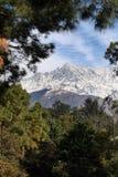 L'Himalaya incorniciata dagli alberi di pino a dharamsala India Fotografie Stock