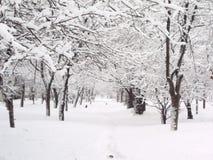 L'hiver 1. image stock