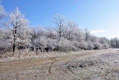 L'hiver. Images libres de droits