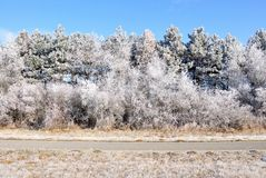 L'hiver. Image libre de droits