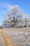 L'hiver. Photo libre de droits