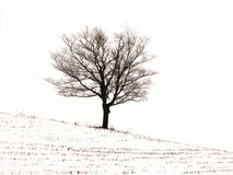 L'hiver photo stock