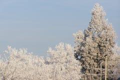 L'hiver Photos libres de droits