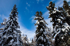 L'hiver alpestre photographie stock